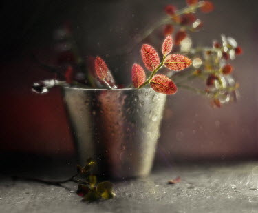 Andreeva Svoboda Twigs with red leaves in vase Flowers