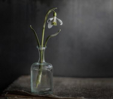 Andreeva Svoboda Flower in vase Flowers