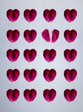 Isabelle Lafrance Pattern of Heart-shaped flower petals Flowers