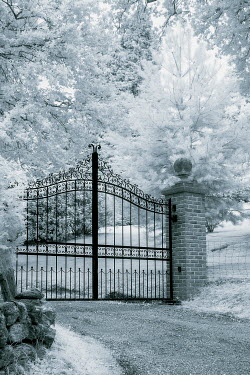 Trevor Payne ORNATE GATE WITH TREES AND DRIVEWAY Gates