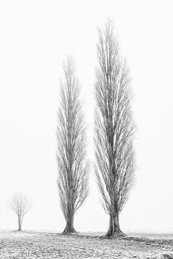 Lars van de Goor TREES IN FIELD IN WINTER Trees/Forest