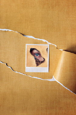 Kelly Sillaste POLAROID PHOTO OF FEMALE EYE ON TORN PAPER Miscellaneous Objects