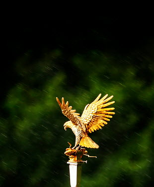 Stephen Mulcahey A roman eagle standard outdoors Miscellaneous Objects