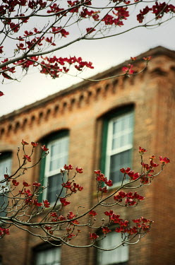 Debra Lill Red flowers on branches and brick building See All Buildings/Architecture