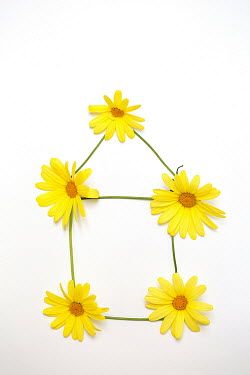 Alison Archinuk YELLOW FLOWERS AND GRASS IN SHAPE OF HOUSE Miscellaneous Objects