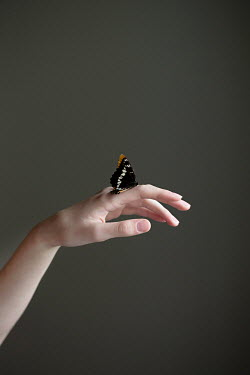 Jaime Brandel Butterfly on teenage girl's hand Insects