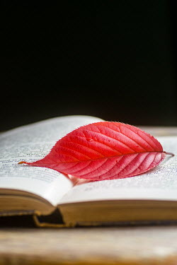 Mohamad Itani Red leaf on open book