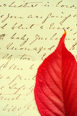 Mohamad Itani Red leaf on handwritten letter