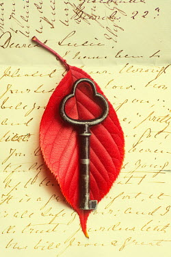 Mohamad Itani Red leaf and antique key on handwritten letter