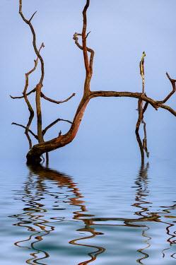 Trevor Payne Dead tree in lake