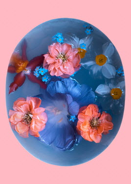 Magdalena Wasiczek Flowers composition with blue tulip, pink chaenomeles, forget-me-not, red orchid and narcissi