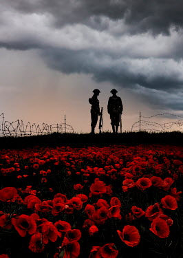 Stephen Mulcahey A silhouette of two ww1 soldiers  near a poppy field