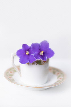 Magdalena Wasiczek china teacup with purple flowers