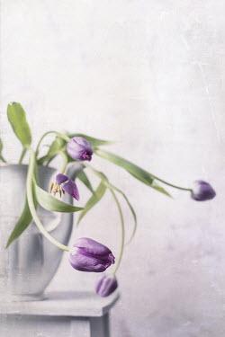 Magdalena Wasiczek purple tulips in a porcelain jug