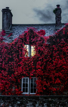 Maggie McCall Red ivy on house