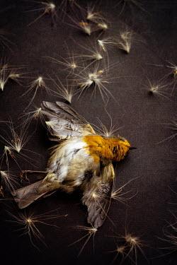 Maria Petkova dead bird