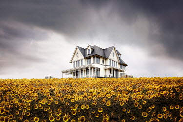 Yolande de Kort COUNTRY MANSION HOUSE WITH SUNFLOWER GARDEN Houses