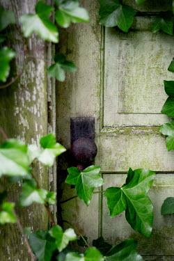 Jaime Brandel Ivy growing on door