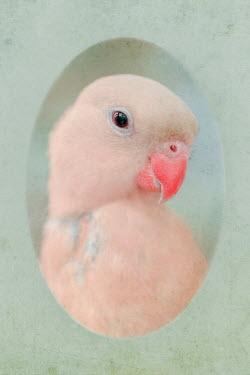 Magdalena Wasiczek portrait of parrot