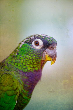 Magdalena Wasiczek portrait of parrot with colored plumage