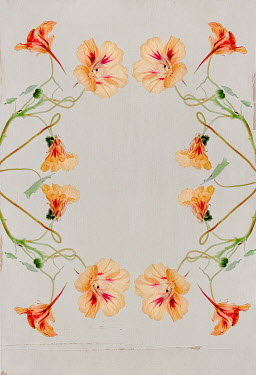 Magdalena Wasiczek Floral frame in art nuvo style