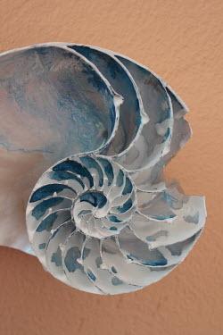 Giovan Battista D'Achille Broken nautilus shell