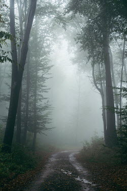 Andrei Cosma Misty forest