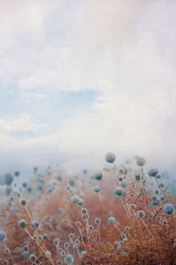 Magdalena Wasiczek landscape with blue great globe-thistle