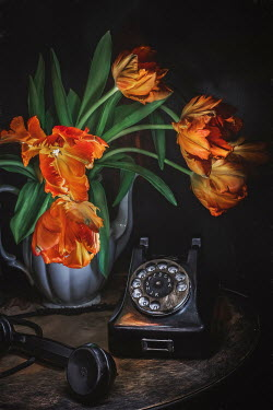 Magdalena Wasiczek vintage black telephone and tulips on wooden table