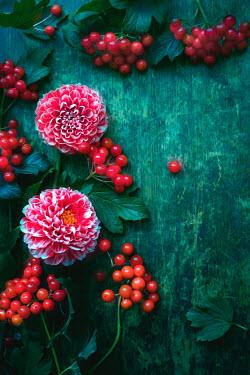 Magdalena Wasiczek RED FLOWERS AND BERRIES ON GREEN WOOD Flowers