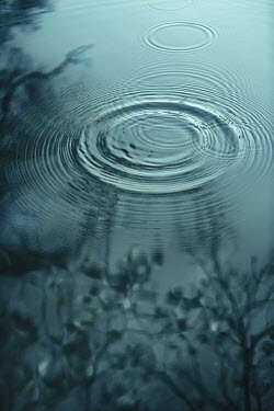 Magdalena Russocka ripples and tree reflected in water