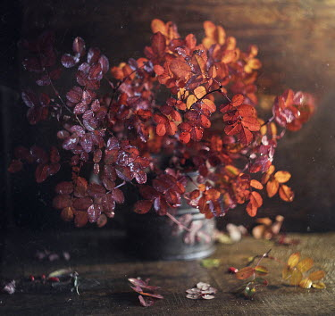Andreeva Svoboda WET RED LEAVES IN PEWTER CUP Flowers