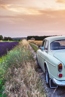 Ysbrand Cosijn CLASSIC CAR IN COUNTRYSIDE WITH LAVENDER FIELD Cars