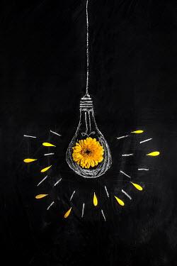 Kelly Sillaste YELLOW FLOWER AND PETALS ON LIGHTBULB DRAWING ON BLACKBOARD Flowers