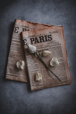 Magdalena Wasiczek WILTED ROSE ON OLD FRENCH NEWSPAPERS Flowers