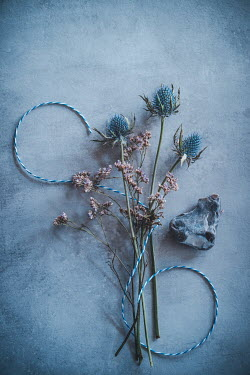Magdalena Wasiczek BLUE THISTLES WITH STRING AND STONE Flowers