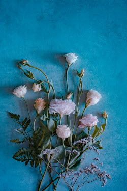 Magdalena Wasiczek bouquet of white and pink roses on blue background Flowers
