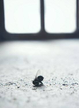 Mark Owen DEAD INSECT LYING BY WINDOW Insects