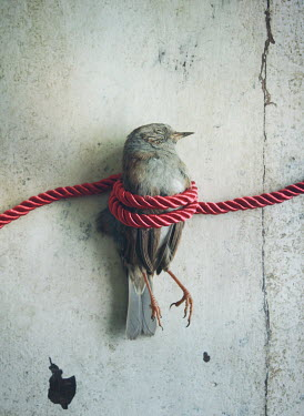 Mark Owen DEAD BIRD TIED WITH RED CORD Birds