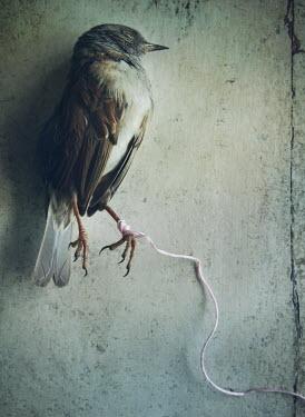 Mark Owen CLAW OF DEAD BIRD TIED WITH STRING Birds