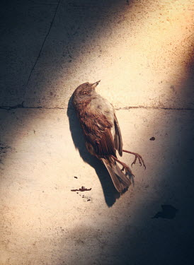 Mark Owen DEAD BIRD LYING ON FLOOR FROM ABOVE Birds