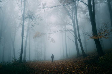 Andrei Cosma SILHOUETTED MAN STANDING IN FOGGY FOREST Men