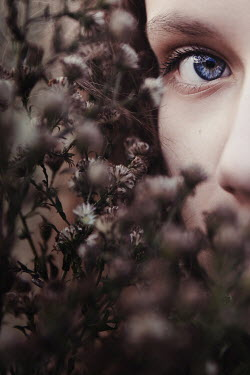 Natasza Fiedotjew Close up of eye of young girl hiding face in dry flowers