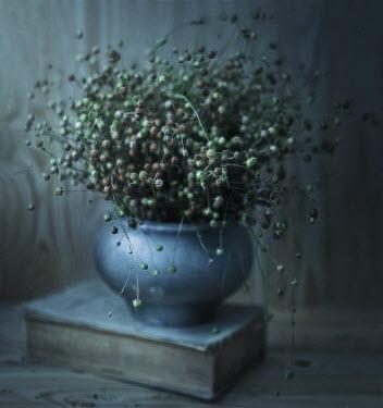 Andreeva Svoboda Flower buds in vase
