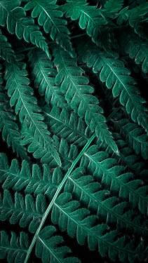 Andreeva Svoboda Close up of fern