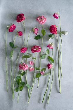 Magdalena Wasiczek twelve roses