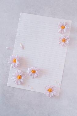 Magdalena Wasiczek daisies and a sheet of notebook paper