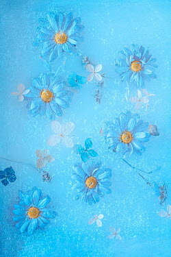 Magdalena Wasiczek close up of daisies and hydrangea petals in ice