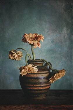 Magdalena Wasiczek wilted gerberas in a vase
