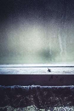 Marie Carr Dead fly on windowsill